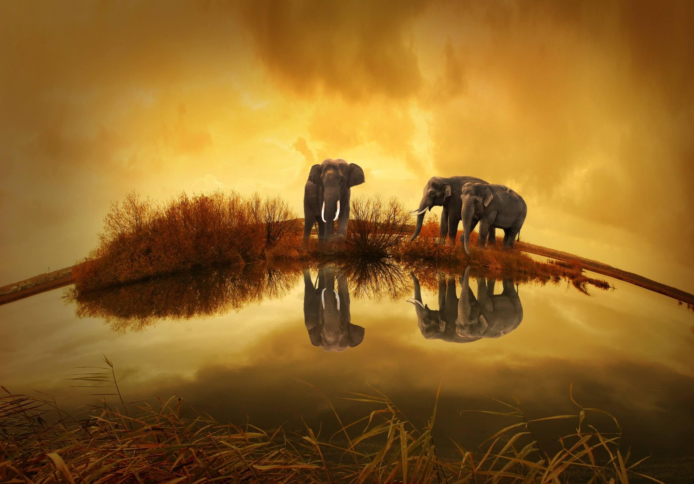 el-elefante-encadenada-psicologia